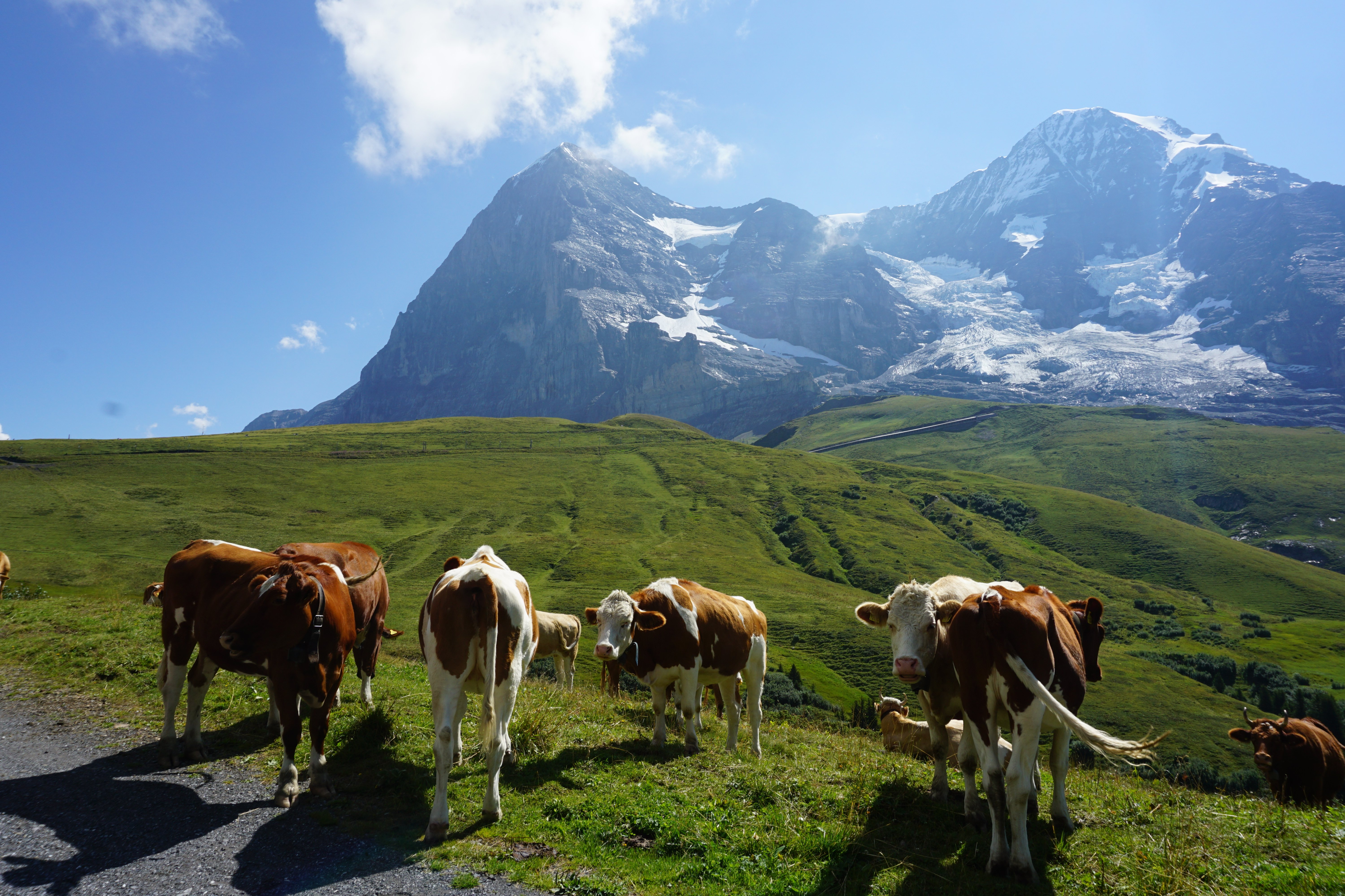 Mannlichen to Kliene Scheidegg Wildflower Hike | Where in the World Wednesday | Weekly travel series on Pages to Passport blog